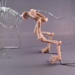 Imaginatomy - Pelvis & hind legs