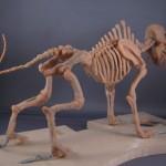 Imaginatomy - Full skeleton, baked, other side