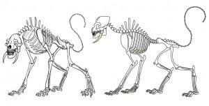 Imaginatomy Skeletons